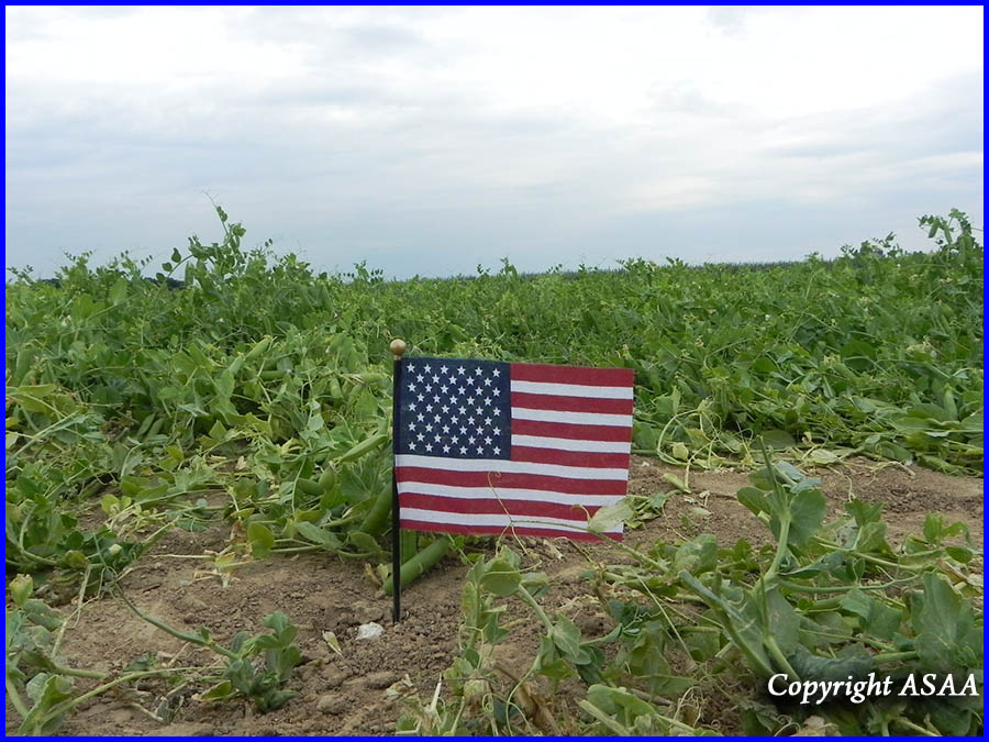 Le Cardonnois - American flag on the crash site